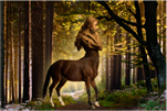 Centaur Photoshop Art